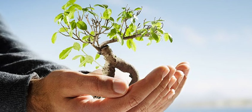 Sustentabilidade e respeito pelo meio ambiente